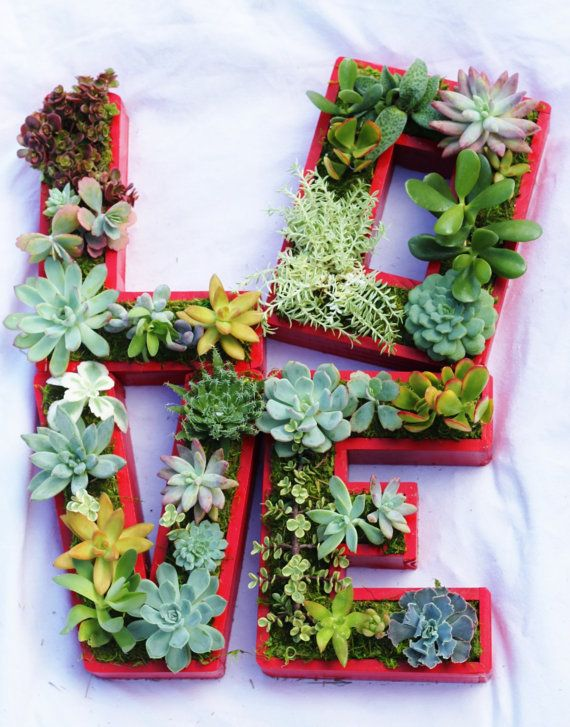 Such a cute idea to plant succulents in letters and hang them on the wall.