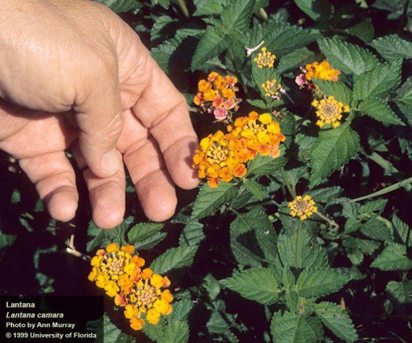 Image result for nfl invasive plants uf