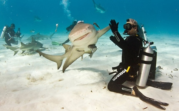 High fiving a shark!?  No thanks. dudleyj: Like A Boss, Perfect Time Photo, High Five, Buckets Lists, Animal Photo, Scubas Diving, Highfiv, Sharks, The Bahama