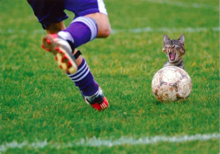 Cat, Soccer Ball Postcard from Astrid in Itzehoe, Germany