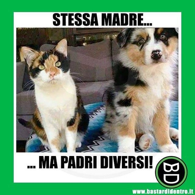 Fratellastri! #bastardidentro #cane #gatto www.bastardidentro.it