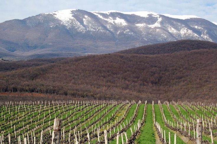 αμπελώνες Κυρ-Γιάννη, Ελλάδα Kir-yianni Vineyards, Greece