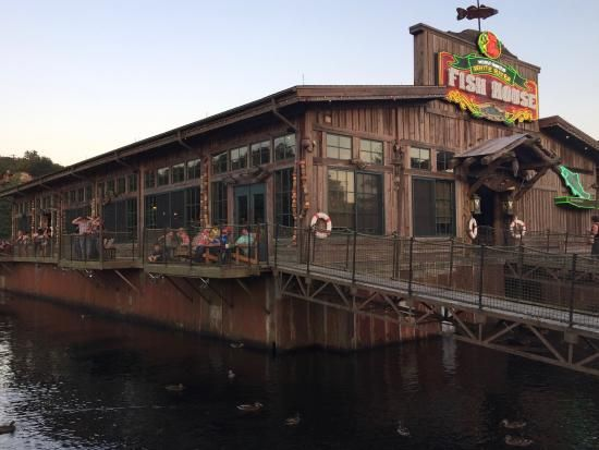 white river restaurant branson   Crusted Trout - Picture of White River Fish House, Branson ...