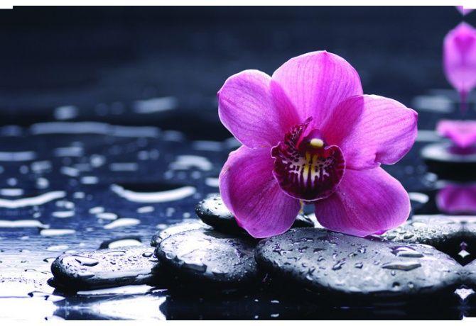 Stampa su Tela 'Fiori Orchidea'