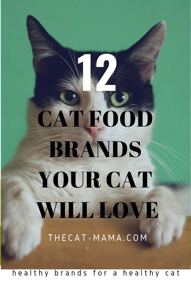 Looking For The Best Dry Cat Food Brands For Your Little Munchkin Finding Good Dry Cat Food Is Important To The Health Cat Food Brands Dry Cat Food Mama Cat