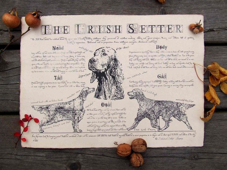 Antique styled dog standard - Irish setter by Creativedoglover on Etsy