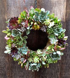 Circular succulent door wreath