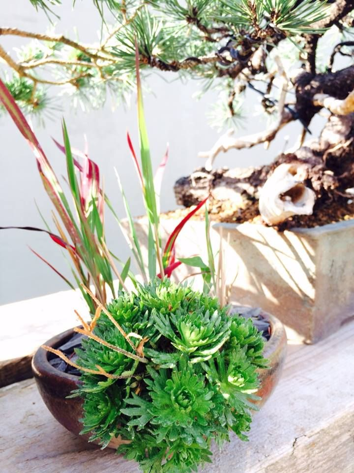 small plants in pot