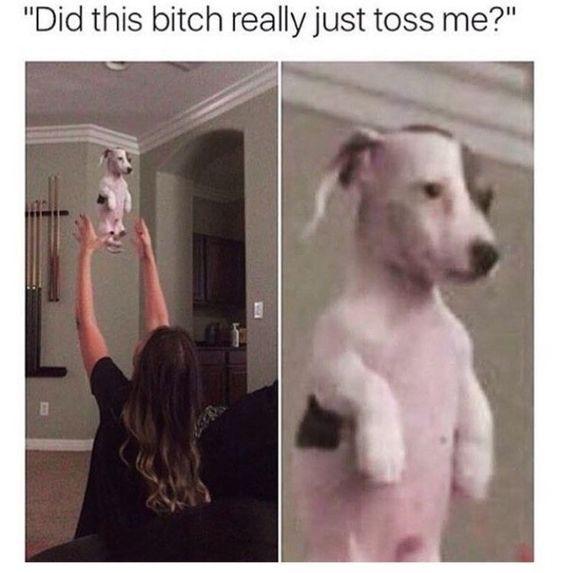 26 lustige Meme Hunde lustig lachen