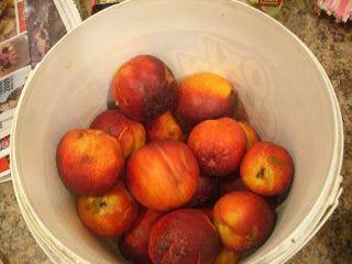 Fruit Cobblers - Lauren's Latest