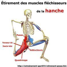 25 best ideas about fascia lata on pinterest muscle for Etirement cuisse interieur