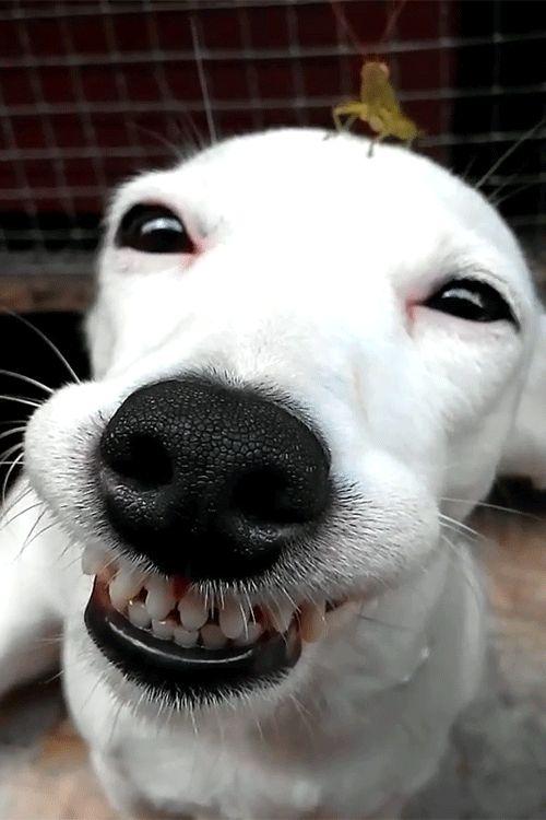 гифка собака смеется вот снимок