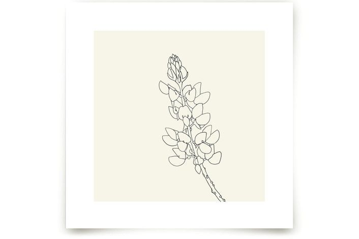 Lupine by Jorey Hurley at minted.com