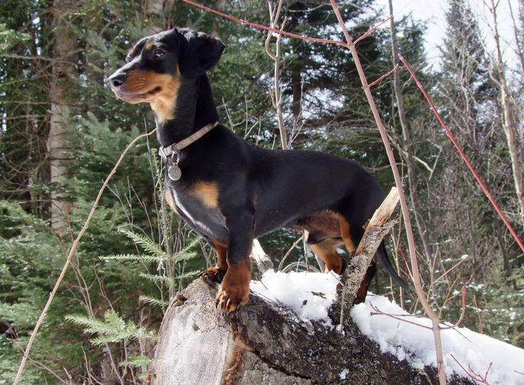 Dog Explorer (crusoe)
