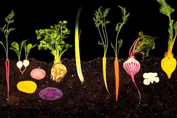 food-modernist-cuis_153536b.jpg (780×520)