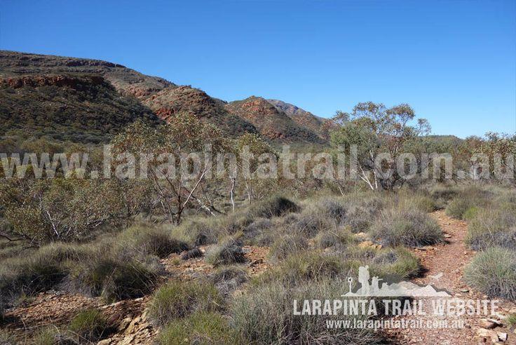Paralleling the foothills of Mt Sonder just afer Rock Bar gap. Image looking east. © Explorers Australia Pty Ltd 2014
