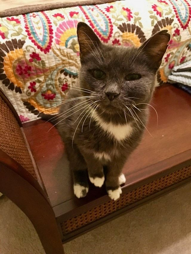 23 Year Old Cat Surrendered To Shelter Is So Thankful To Be Old Cats The Shelter Pet Project Cats