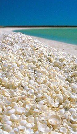 Golfo L'Haridon, Shark Bay, Austrália ocidental Muitas e muitas conchas formam a areia dessa praia, com uma camada de 7 a 10 metros de espessura. A alta salinidade da água faz com que as conchas proliferem em abundância, já que seus predadores não sobrevivem em tais condições. Esta é uma das únicas praias do tipo.