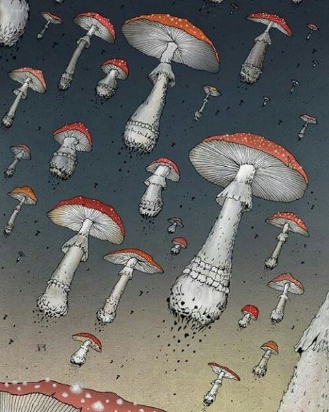 Shrooms. ________________________________ #trippy #stonernation #potheadsociety #drugs #420friendly #lsd #shrooms #hippylife #hippielife #enlightened #awakened #pinealgland #thirdeye #dmt #psychedelicart #psychedelia #psychedelics #acid #acidtrip #acidart #trippyshit #psyart #magicmushrooms #psilocybin #ayahuasca #psychedelicsociety #psicodelia #psicodelico #sacredgeometry