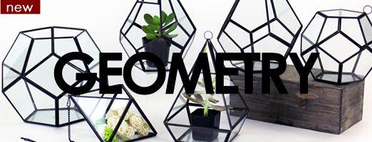 Wholesale Glass Vases | Apothecary Jar | Plant Terrariums