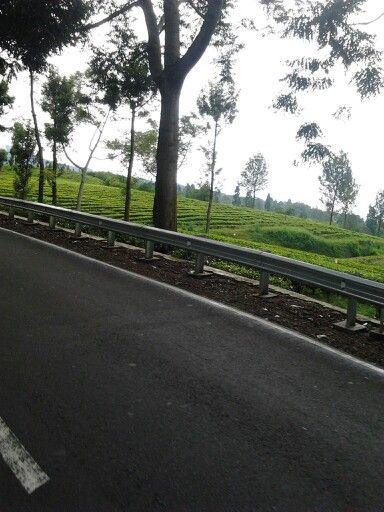 Kebun teh, Gunung Mas,Bogor Indonesia