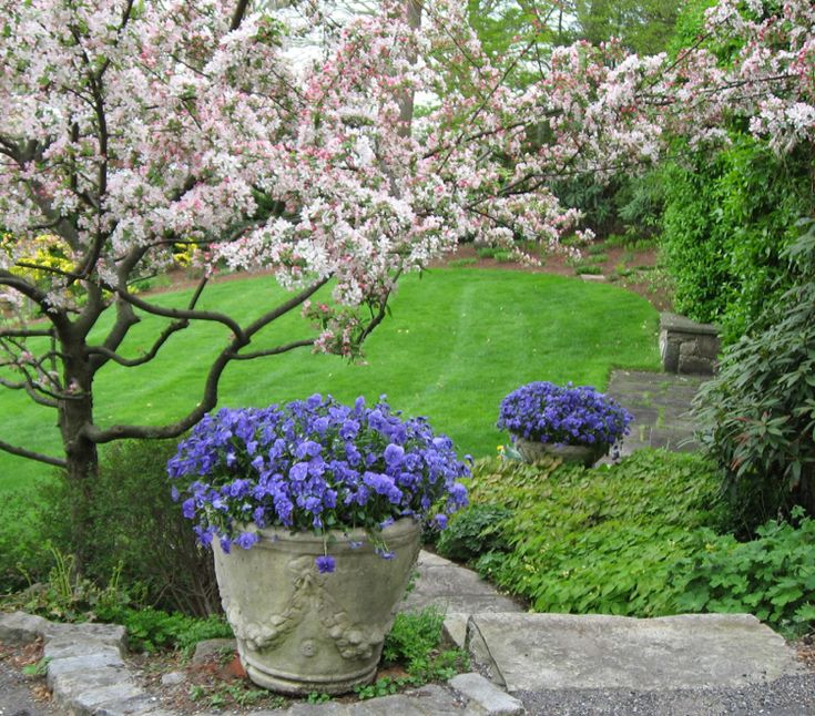 25+ Best Ideas About Garten Stiefmütterchen On Pinterest ... Garten Stiefmuetterchen Ratgeber Pflanzen