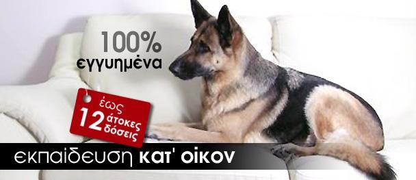Εκπαίδευση σκύλων στο σπίτι ή εκπαίδευση στο εκπαιδευτήριο σκύλων; H Alpha dogs και ο εκπαιδευτής σκύλων Γιώργος Ψάλλας σας παρέχουν την δυνατότητα να επιλέξετε τον τρόπο με τον οποίο θα κάνετε την εκπαίδευση του σκύλου σας. #εκπαιδευση #σκυλων