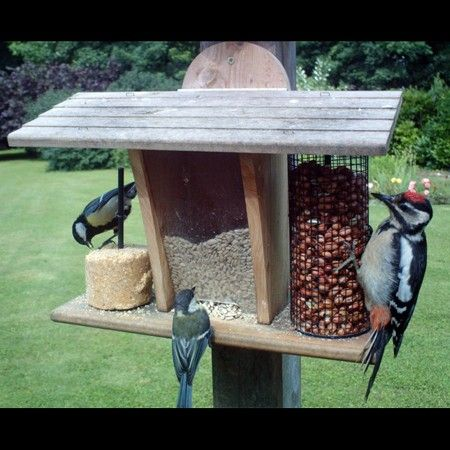 Mangeoire murale pour oiseaux - Restaurant - Plantes et Jardins