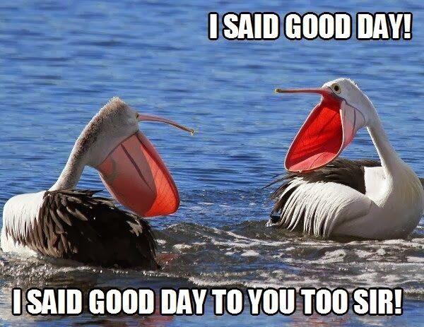 30 Funny Bird Pictures 3