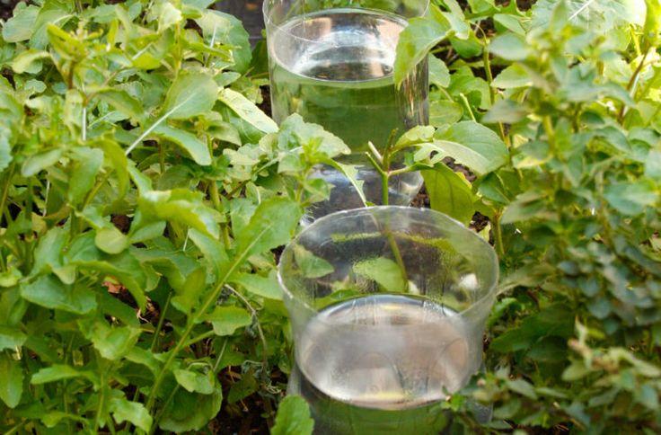 25 Best Ideas About Diy Irrigation System On Pinterest