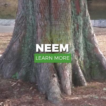NEEM HEAD-LICE TREATMENTS            LEARNMORE