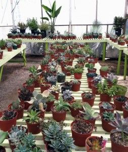 If I can master growing succulents from cuttings, I will save myself so much money!