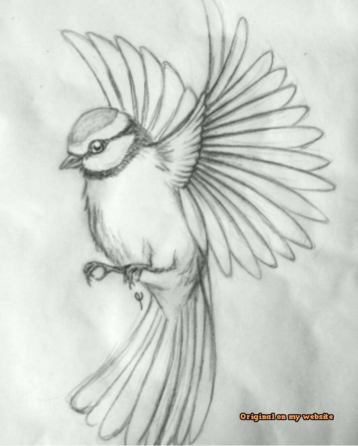 Drawing Art Tumblr 40 Free Easy Animal Sketch Drawing Ideas