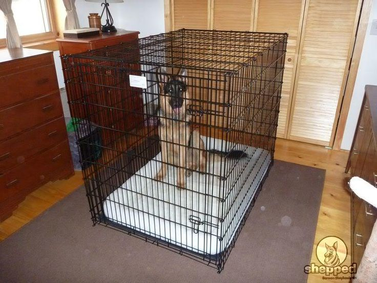 Crate Training For Your German Shepherd