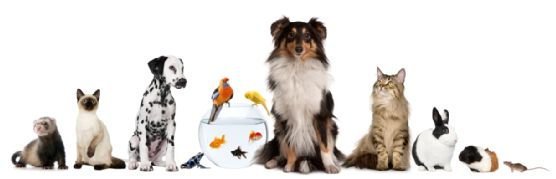 Have you noticed that even after you have cleaned up pet urine from your carpet, the smell seems to linger on?