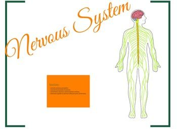 This amazing product will blow you away! Zoom in, zoom out and learn all about the Nervous System! Try it here:Preview Or download the Preview file and follow the link. This leaves ppt presentations miles away! Try it! The teacher decides what can be explored and how exhaustive the explanations can be.
