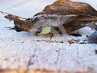 Frosted leaves on the snowy table with empty space for the text. https://www.dreamstime.com/stock-photography-image105105669#res18554481 #winter #christmas #background #beautiful #beauty #backdrop #design #designer #xmas #decoration #commercial #advertisement #advertising #card #calendar #newyear #style #landscape #wood #plank #decor #wonderful #autumn #season #seasonal #art #love #lovepicture #snow #snowflake