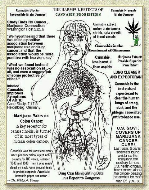 cause and effect medical marijuana Medical marijuana is a drug used to treat glaucoma and other conditions learn  about side effects, drug interactions, dosages, warnings, and more  weight  gain shockers:surprising reasons you're gaining weight weight gain  shockers.