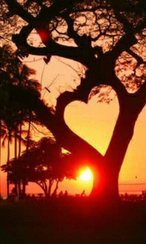 Hasta los arboles tienen corazon