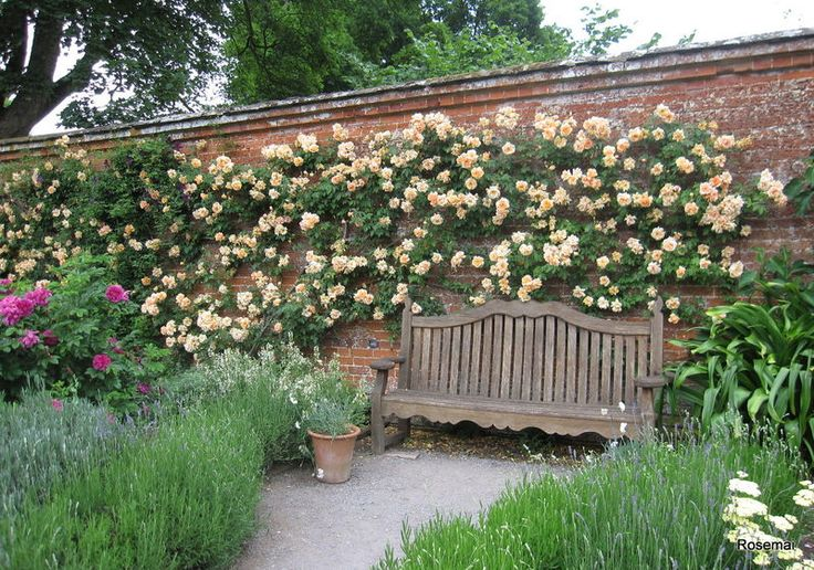 Pretty garden seat surrounded by climbing roses and lavender.