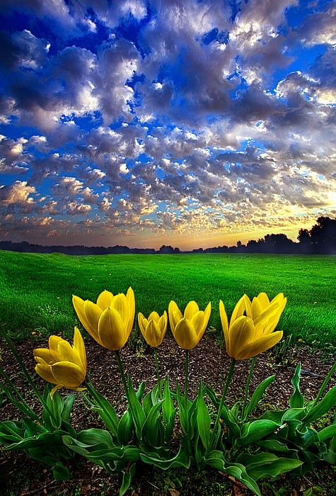 """""""What Kind of World do You Want"""" Horizons by Phil Koch. Lives in Milwaukee, Wisconsin, USA. http://phil-koch.artistwebsites.com https://www.facebook.com/MyHorizons"""