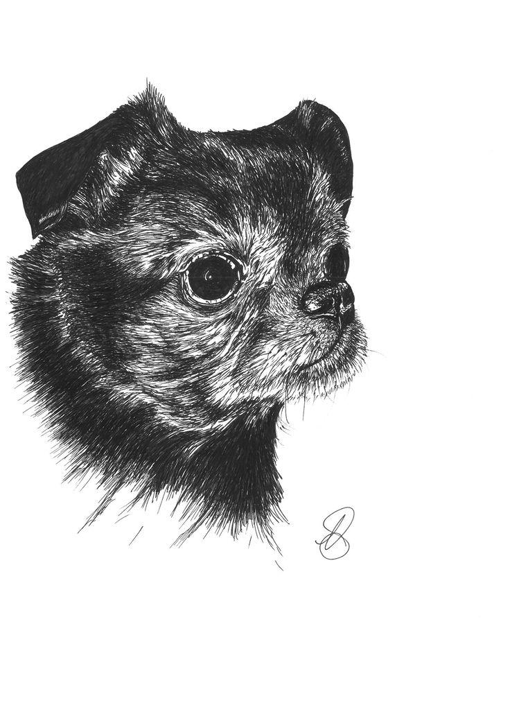 Sweet little Alfie, the Griffon Bruxellois