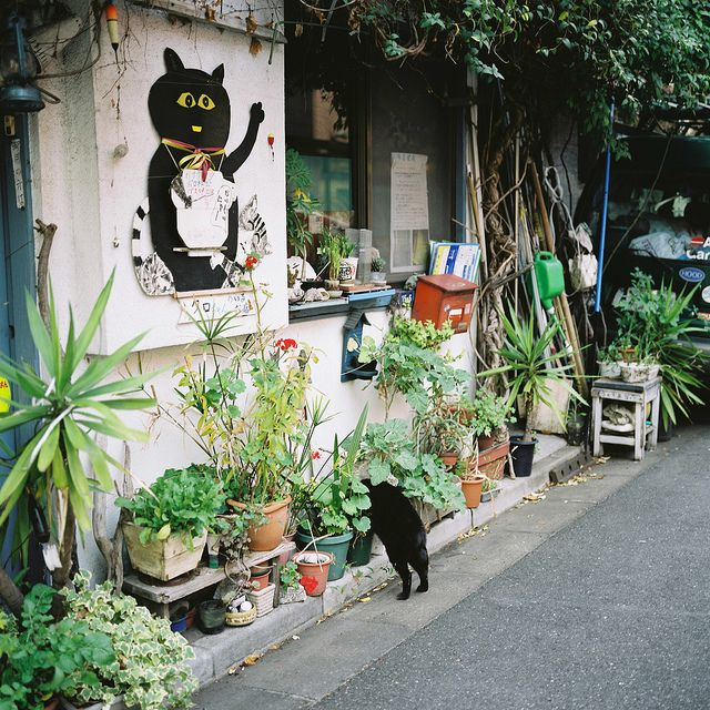 Untitled | Flickr - Photo Sharing!Cat Cafes Japan, Cat Gardens, Black Kitty, Green, Plants Cat, Black Cats, Cat Street Japan, Photos Shared, Cafes Shops