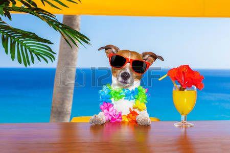 zomer+vakantie%3A+grappige+koele+hond+cocktails+drinken+in+de+bar+in+een+beach+club+party+met+uitzicht+op+de+oceaan+op+zomervakantie+vak…
