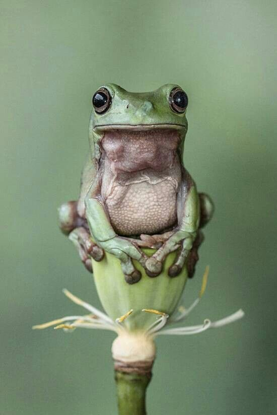 Adorable Amphibian - Frog