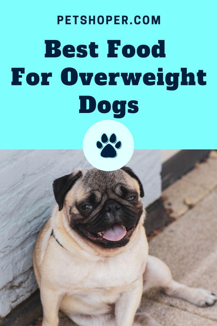 Pin On Dog Puppy Diet Food