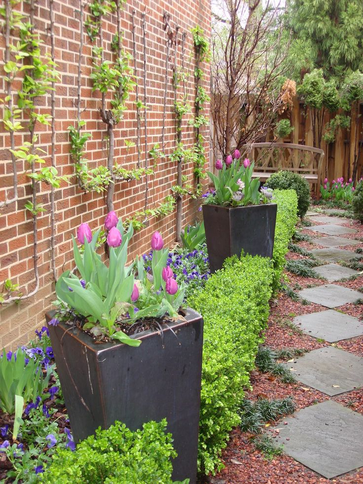 12 best narrow walkway plantings images on pinterest for Narrow flower bed ideas