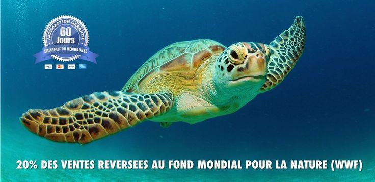 Le meilleur magasin en ligne dédié à la tortue de terre et la tortue de mer. 20% des ventes versées au Fond Mondial pour la Nature (WWF)