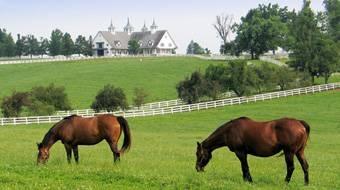 Lexington, Kentucky: Horses Farms, Thoroughbred Hors, Favorite Places, Wonder Places, Kentucky Horses, Lexington Kentucky, Lexington Ky, Sweet Home, Weights Loss