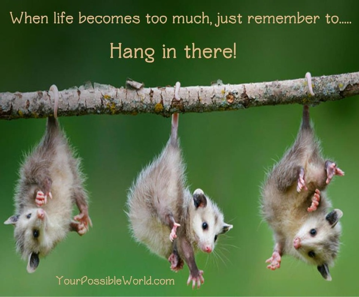 Hang in there! Nature At It's Best Pinterest Hang in